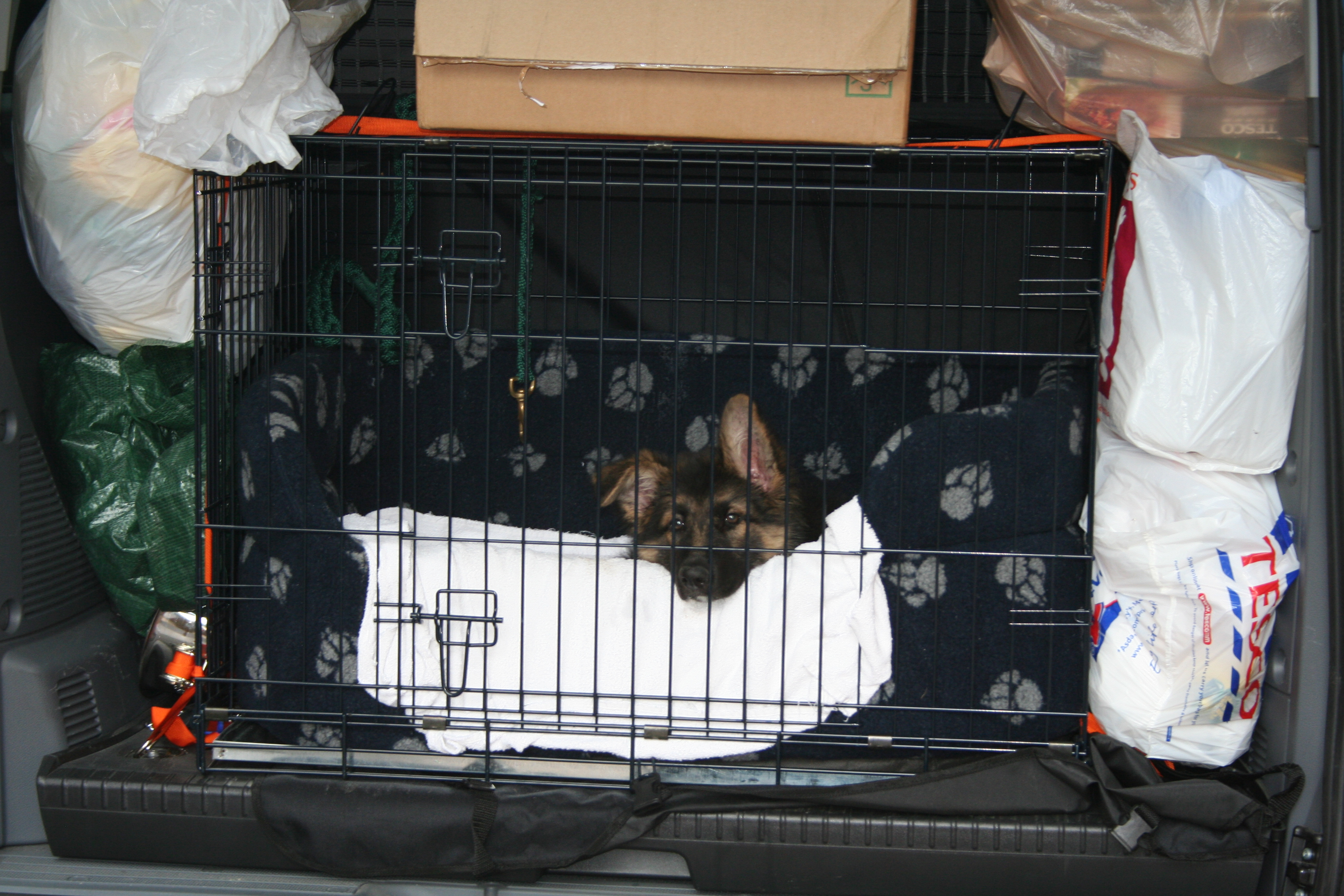 Puppy in car crate